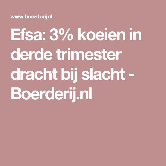 Efsa: 3% koeien in derde trimester dracht bij slacht - Boerderij.nl