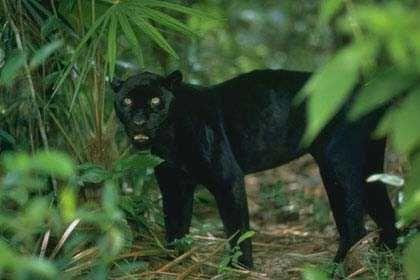 Animals love photos: Animals in the rainforest