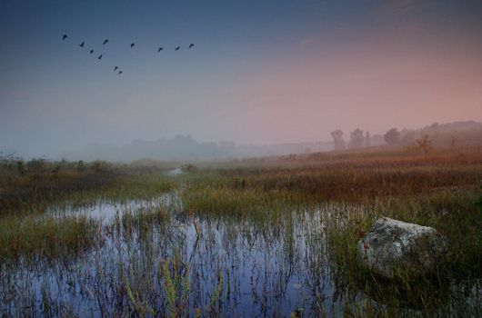Happy World Wetlands Day | MNN - Mother Nature Network