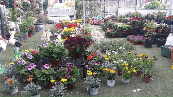 bahçıvan peyzaj (@bahcivan_peyzaj)   Twitter