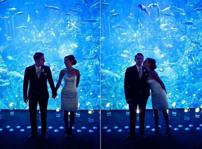 17 Best Images About Aquarium Wedding On Pinterest Beach