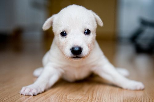 Awwwwww. He slipped. What a sad little puppy face!: Animal Lovers, Puppies Faces, Adorable Pet, Little Puppies, Adorable Furbal, Future Pet, Baby Dogs, Amazing Animal, Husky Puppies