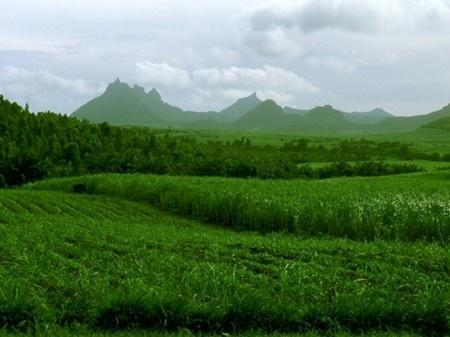 Le groupe diversifié Terra Mauricia Ltd compte investir dans une troisième sucrerie en Afrique pour un investissement d'environ$ 200 millions.Des projets sont à l'étude en Afrique de l'Est et centrale, en particulier au Mozambique au Kenya et Tanzanie. Une décision devrait être prise au premier trimestre 2013.Terra possède une sucrerie à Maurice, Terra Milling Ltd, qui produit environ 80000 tonnes de sucres spéciaux à destination de l'Europe, et une participation de 25,5% dans Sucriv