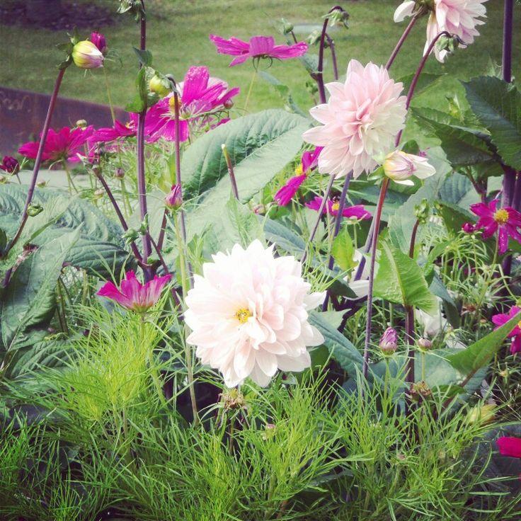 Blommor i uppsala