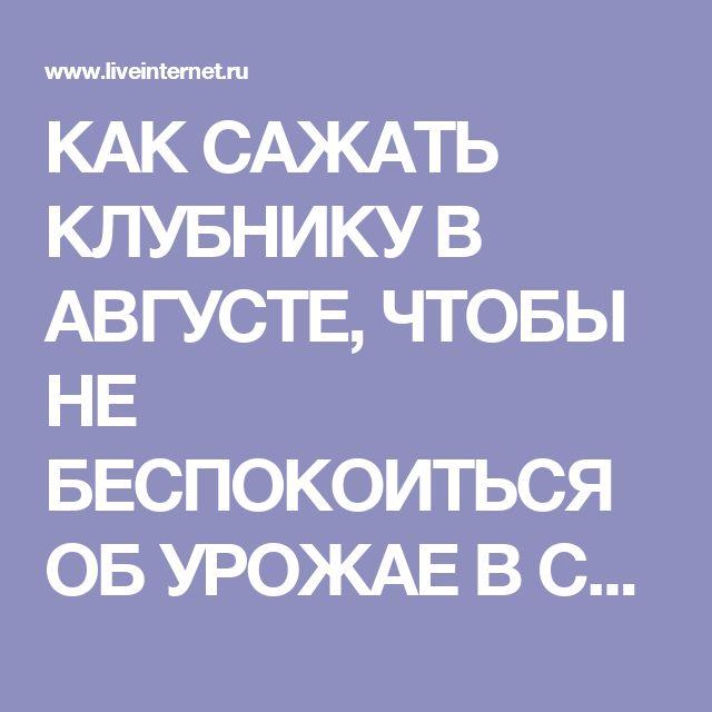 КАК САЖАТЬ КЛУБНИКУ В АВГУСТЕ, ЧТОБЫ НЕ БЕСПОКОИТЬСЯ ОБ УРОЖАЕ В СЛЕДУЮЩЕМ ГОДУ?. Обсуждение на LiveInternet - Российский Сервис Онлайн-Дневников