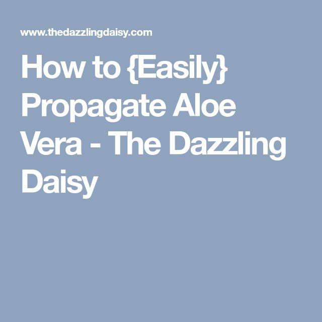 How to {Easily} Propagate Aloe Vera - The Dazzling Daisy