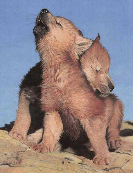 Wolf Pup Hugging its Sibling.