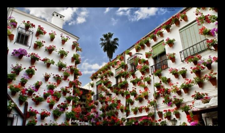 Los patios de Córdoba. ...patrimonio de la humanidad, ya está todo dicho. Ven y conocelos
