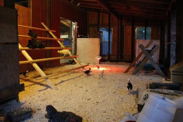 Chicken Coops Inside Barn | Natural Chicken Keeping: Fire ...