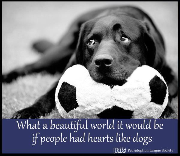 Yup!: Animals, Heart, Dogs, Quotes, Truth, Pet, So True, Puppy, Friend