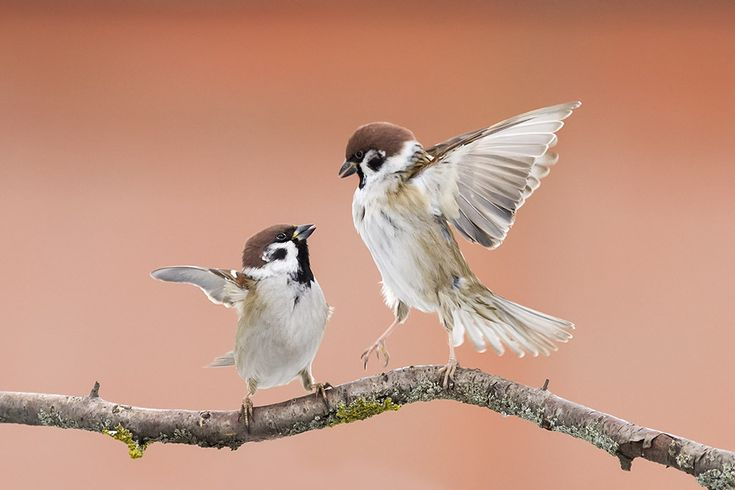 «Петушки» — National Geographic Россия