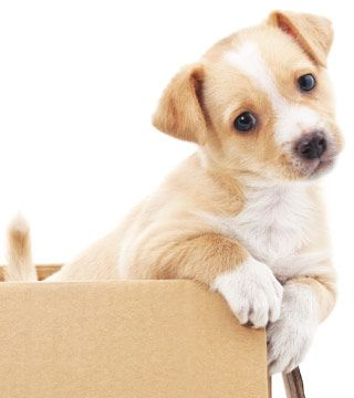 Puppy Care - Metairie Small Animal Hospital