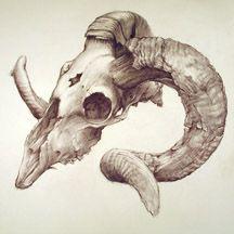 moose skull drawing | Ram Skull