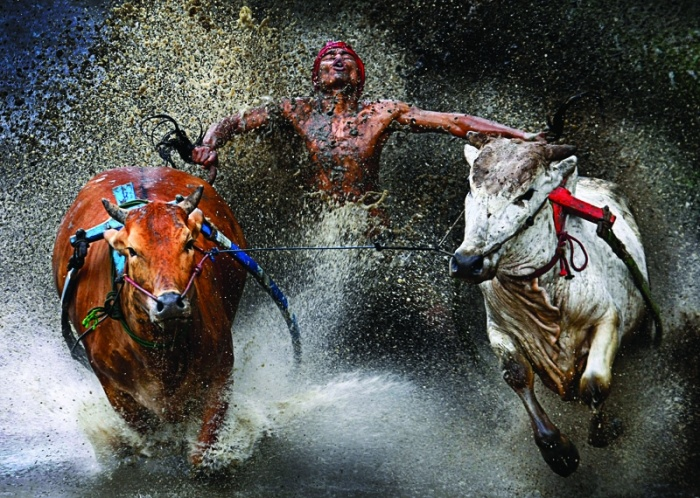 """""""Bull Race"""" by WeiSeng Chen. The 'Bull Race' is a regular event held at the end of the harvest season on the wet and muddy paddy (rice) fields, in West Sumatera, Indonesia. Villages will send in their best jockey and strongest bulls for this event. Winner takes home a trophy, but more importantly fame and honor, and lots of bragging rights."""