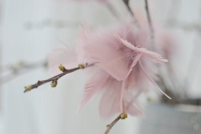 Glad Påsk med rosa fjädrar