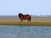 Day trips and Things to Do in Emerald Isle NC