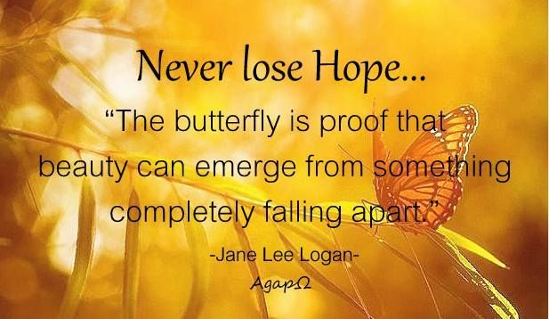 """Never lose Hope...""""The butterfly is proof that beauty can emerge from something completely falling apart."""" -Jane Lee Logan"""