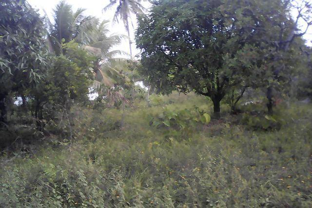 Madre de Deus (Bahia) Brasile | ... no caipe - Terrenos, sítios e fazendas - Madre de Deus, Bahia | OLX