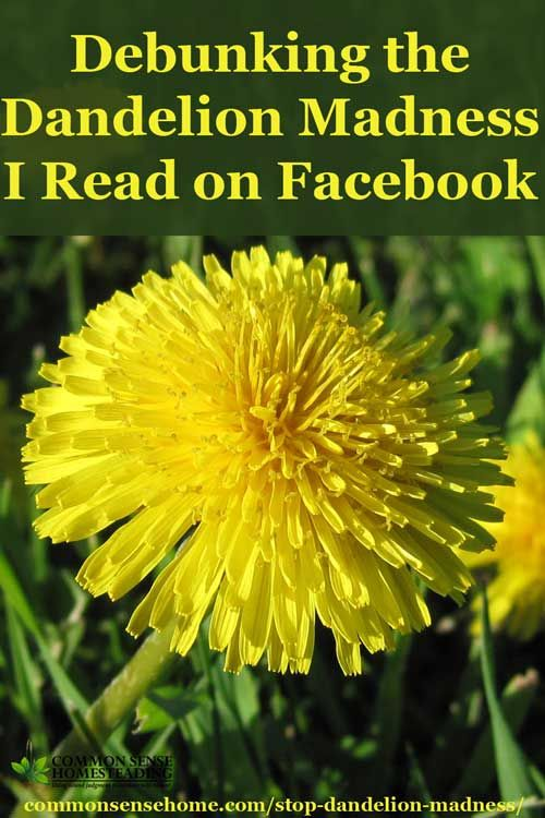 Stop The Dandelion Madness Making Peace With Dandelions And Bees