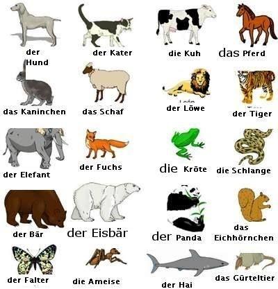 Tiere Deutsch