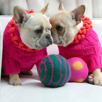 Frenchies in sweaters