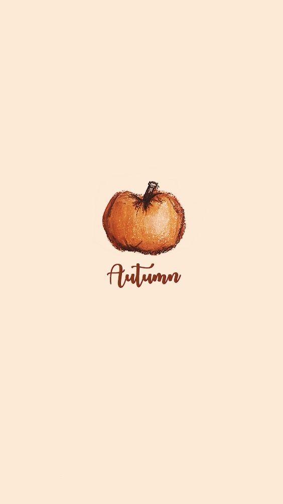 Autumn Pumpkin Wallpaper. Love the Simplicity and Colors of it. #fall #autumn #pumpkin #wallpaper #fallseason