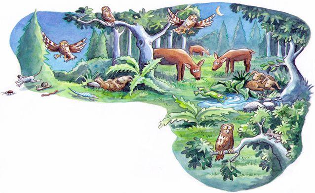 """Tiere in der Nacht Unterrichtswerk """"Karibu"""" Westermann Verlag 2010"""
