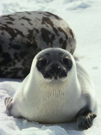 Learn About Seals and Sea Lions