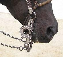 Spade bit horses