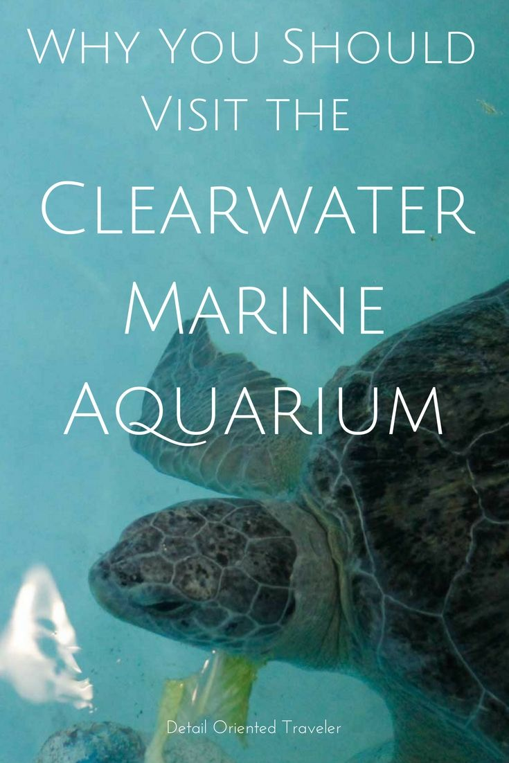 Why you should visit the Clearwater Marine Aquarium. It's more than just seeing Winter the Dolphin from Dolphin Tale... although that's part of the family travel fun!