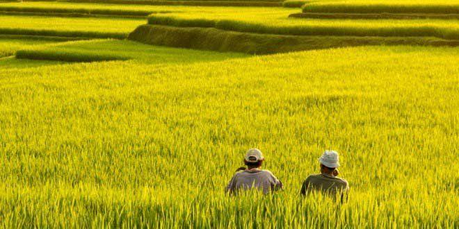 Edupost.id – Di beberapa negara di Asia, terjadi penurunan kontribusi sektor…