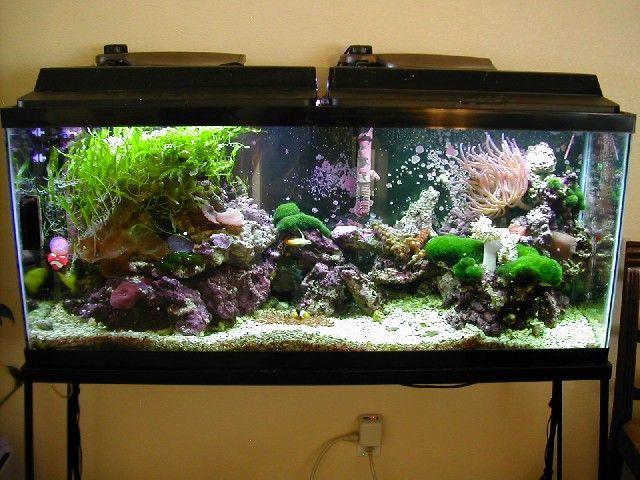 17 best ideas about 55 gallon aquarium on pinterest 55 for One gallon fish tank