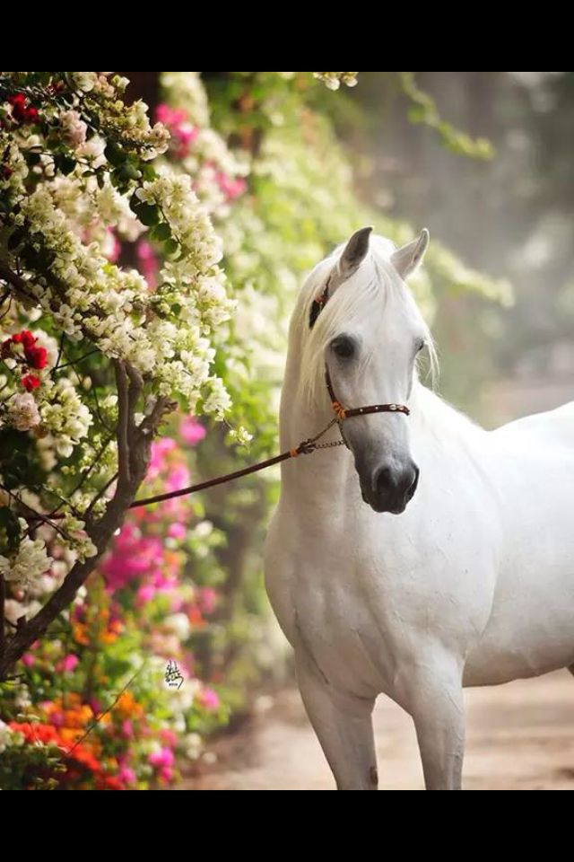 Gorgeous arabian, and gorgeous flowers!