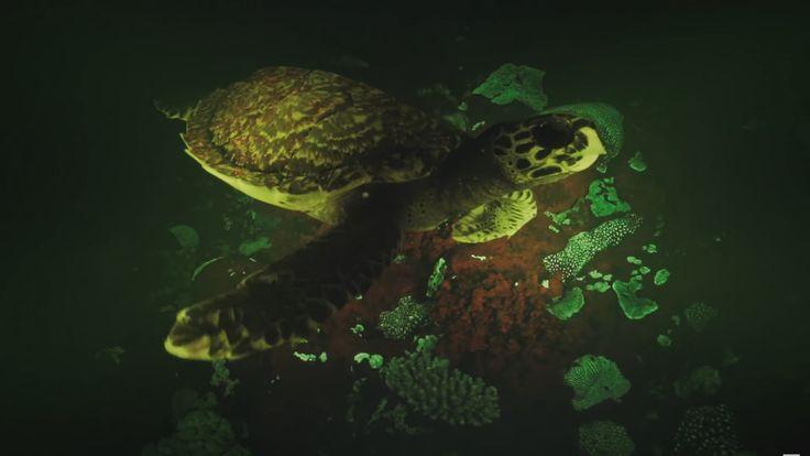 Amazing film captures biofluorescent turtles underwater at ISO 4.5 Million