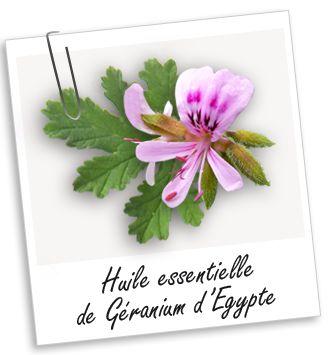 Anti-infectieuse et antifongique, cette huile essentielle Géranium Egypte BIO est adaptée en cas de mycoses, acné et eczéma. C'est aussi une huile exceptionnelle pour vos soins minceur et capillaires. Utilisée en diffusion, elle éloigne les moustiques.