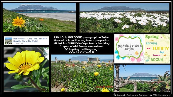 All-time favourite Table Mountain #CapeTown view. Carpets of wild flowers EVERYWHERE. Too gorgeous. Spring fever