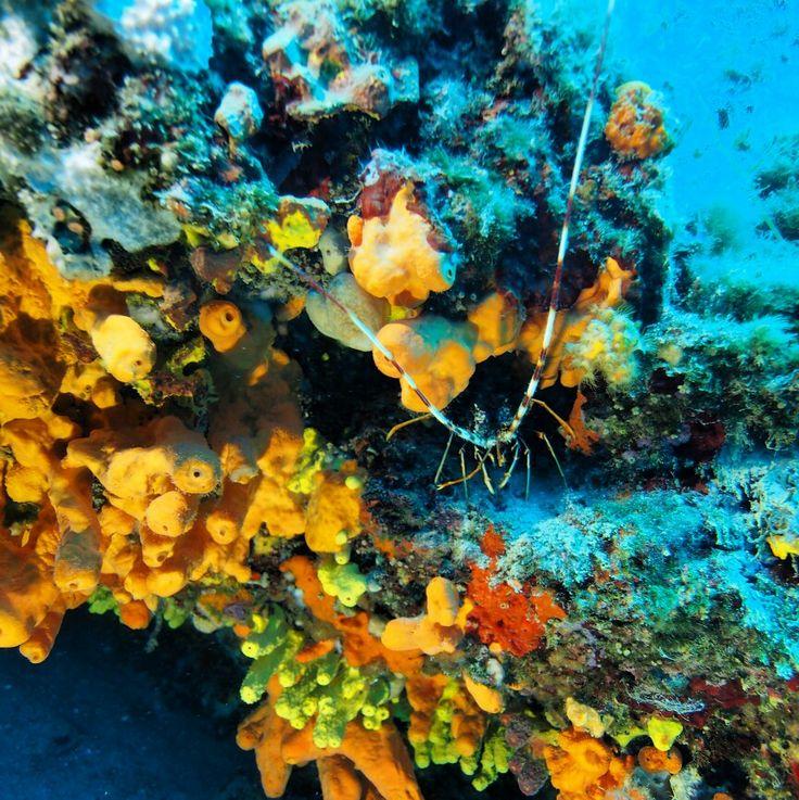 Ayvalık dalış okulu - ida dalış merkezi #scuba #scubadiving #diving #underwater #dalisnoktam #ayvalikdalis #dalış #idadalismerkezi www.idadiving.com