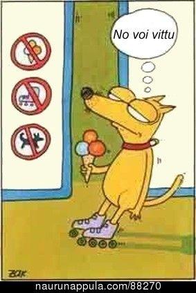Koiraa vituttaa - hauskat kuvat - Naurunappula