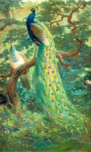Peacocks Illustrated — for personal use only! - ARTEFACTS - antique images