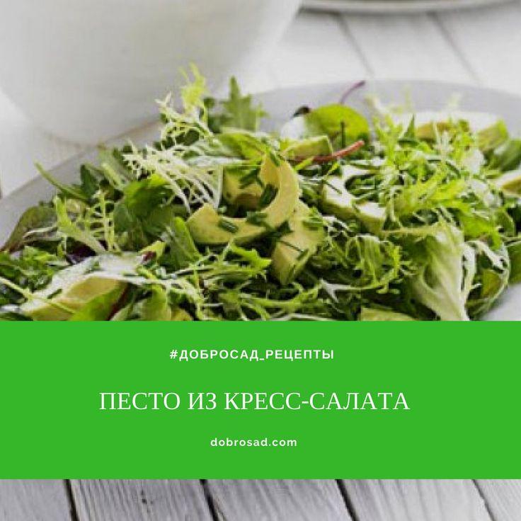 #ДоброСад_рецепты  Ингредиенты:  3 стакана проростков кресс-салата; 4 зубчика чеснока; 1/2 стакана натертого сыра Пармезан; 2 ст.л. оливкового масла; Соль и перец по вкусу.  Приготовление:  Тщательно размельчите проростки кресс-салата в блендере. Утрамбуйте полученное и добавьте верхним слоем в блендер тертый Пармезан, снова размельчите массу до равномерной консистенции. Добавьте по 1 ст.л. оливкового масла за 1 подход смешивания. Добавьте соль и перец перед последним смешиванием…