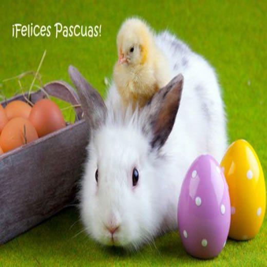 Imagenes De Felices Pascuas Para Compartir Con Mis Amigos - Mundo Imagenes Frases Actuales