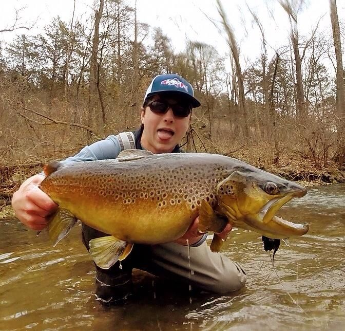 Outstanding Brown Trout From Arkansas Fishing Quotesfishing Tipstrout
