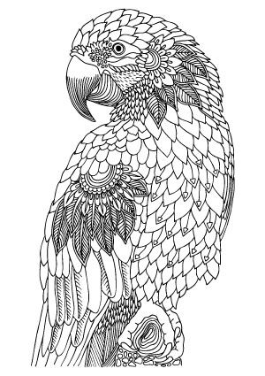 Illustration by Keiti – free printable coloring page