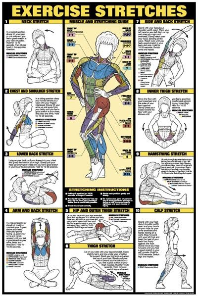 stretching.Charts, Exercise Stretch, Workout Exercies, Muscle, Healthy, Weightloss, Health Fit, Weights Loss, Exercies Stretch