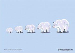 IJsberen meten met kleuters, hoek voor 'poolonderzoekers', kleuteridee.nl , thema Noordpool Zuidpool, free printable.