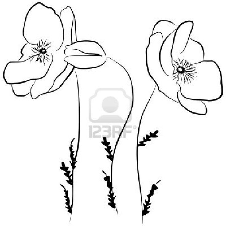 Line Drawing Poppy Flower : Best images about drawings on pinterest