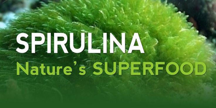 Kinek javasolt a Spirulina alga fogyasztása? Várandós nőknek, akiknek az új élet kialakulásához fokozott tápanyagbevitelre van szükségük. Betegeknek a felépülésükhöz szükséges tápanyagtöbbletre http://ganodermashop.hu/termekek#spirulina-120 Vegetáriánusoknak, akik nem kapnak plusz tápanyagot. A modern ember számára, aki mindig siet és ezért hiányos a táplálkozása. Kamaszoknak, akiknek gyors fejlődésük következtében többlettápanyagra van szükségük. Gyerekeknek, akik kevés zöldséget esznek.