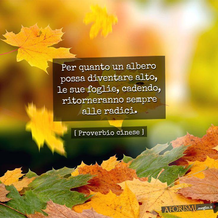 Per quanto un albero possa diventare alto, le sue foglie, cadendo, ritorneranno sempre alle radici. (Proverbio cinese)