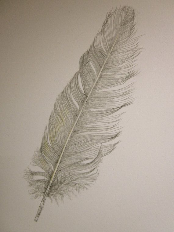 Cockatoo feather original pencil drawing by anne4bags on Etsy