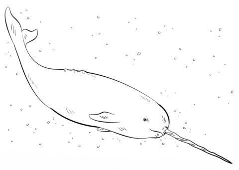 Narwhal Coloring Page From Category Select 20946 Printable Crafts Of Cartoons Nature